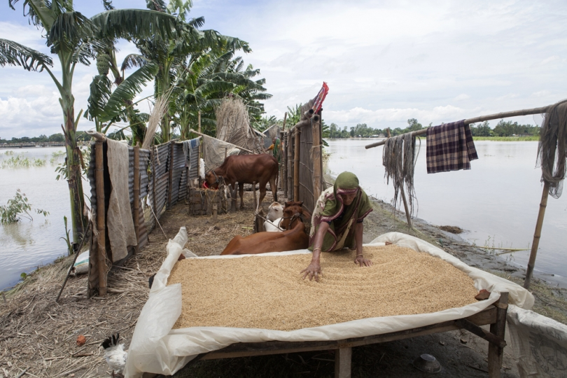 A flood affected woman takes shelter on a highland, drying her paddy at Guthail in Jamalpur. According to the Bangladesh Disaster Management Bureau around 1.5 million people have been affected by this year flood. Rivers in the north started to rise in early July and by the 20th of July nearly all of them started to flow over the danger level. It caused floods in 6 districts, namely, Lalmonirhat, Kurigram, Gaibandha, Jamalpur, Sirajganj and Sunamganj initially and inundated crop fields and dwelling areas, washed away standing crops, houses and household's assets, livestock and displaced the affected people.Bangladesh is one of the most climate change-vulnerable and disaster-prone countries. The rivers of this country are facing tremendous environmental anomalies. They overflow during the rainy season but shrink in other seasons. Floods in our country are directly or indirectly related to sub-Himalayan countries like India, Bhutan, and Nepal. An understanding should be made to protect the eco-system in the regions to minimize the risks of flash floods, and to share the water resources as per international laws.
