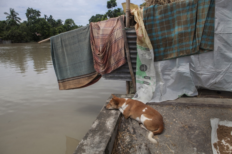 An abandoned dog sits on a bridge at a flooded area in Jamalpur. According to the Bangladesh Disaster Management Bureau around 1.5 million people have been affected by this year flood. Rivers in the north started to rise in early July and by the 20th of July nearly all of them started to flow over the danger level. It caused floods in 6 districts, namely, Lalmonirhat, Kurigram, Gaibandha, Jamalpur, Sirajganj and Sunamganj initially and inundated crop fields and dwelling areas, washed away standing crops, houses and household's assets, livestock and displaced the affected people.Bangladesh is one of the most climate change-vulnerable and disaster-prone countries. The rivers of this country are facing tremendous environmental anomalies. They overflow during the rainy season but shrink in other seasons. Floods in our country are directly or indirectly related to sub-Himalayan countries like India, Bhutan, and Nepal. An understanding should be made to protect the eco-system in the regions to minimize the risks of flash floods, and to share the water resources as per international laws.