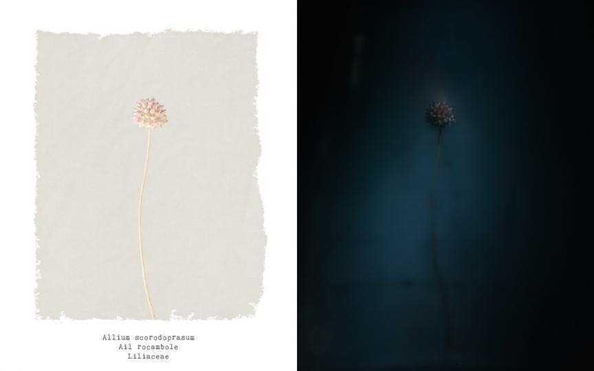 cyclop fleurs de mars the eye of photography magazine. Black Bedroom Furniture Sets. Home Design Ideas
