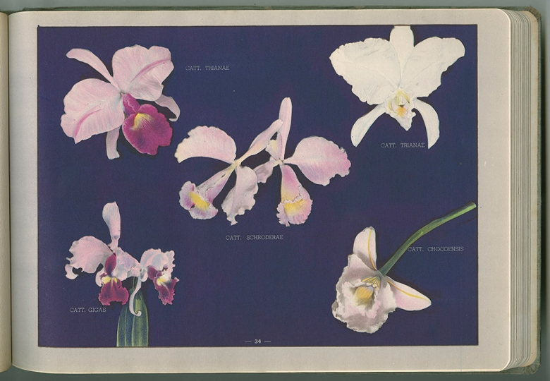Colombian Orchids by Luis F. Osorio, 1941