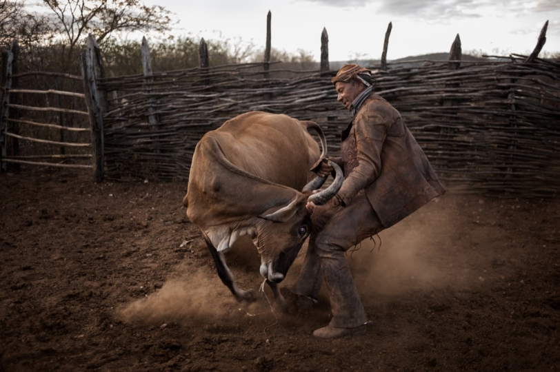 Ingá, Brasil. Pedro Arthur, Pedro Arthur, a cattle breeder, hard at work in the countryside of Brazil © Luis Fabini