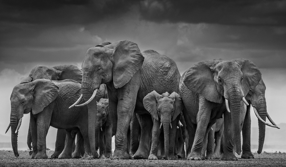 The Circle of Life II, Amboseli, Kenya, 2015 © David Yarrow