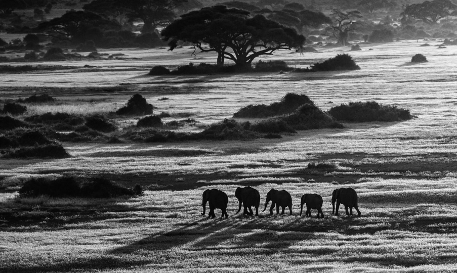 Dawn Commute, Amboseli, Kenya, 2014 © David Yarrow