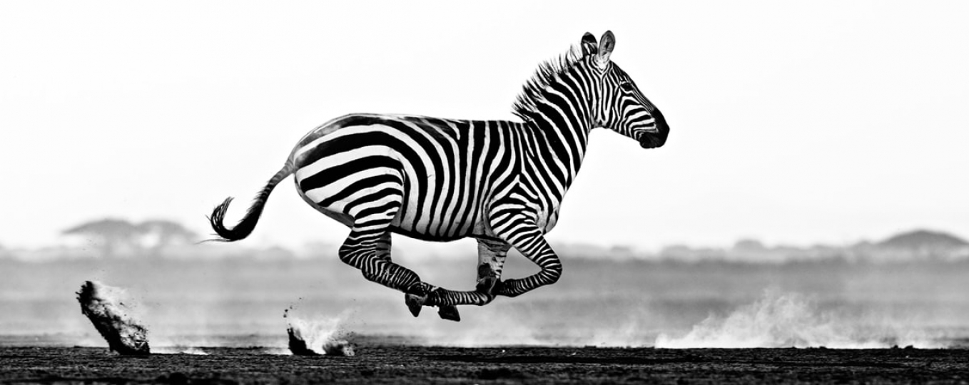 Desert Flight, Amboseli, Kenya, 2014 © David Yarrow