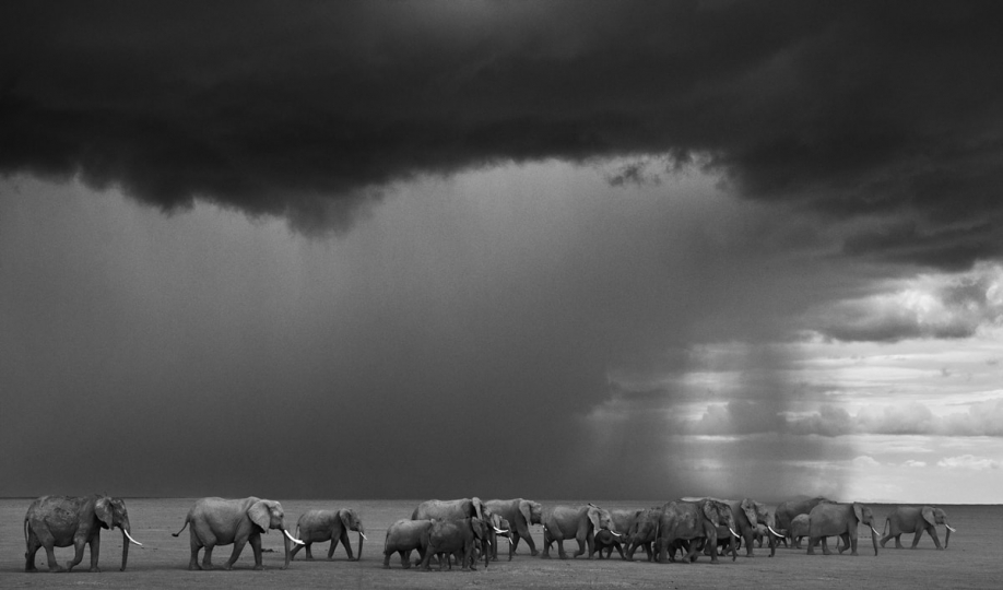 The Gathering Storm, Amboseli, Kenya, 2012 © David Yarrow