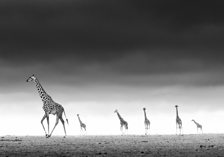 High, Amboseli, Kenya, 2013 © David Yarrow © David Yarrow
