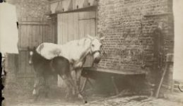 The Little-Known Horses of Eugène Atget