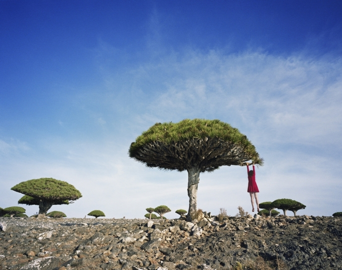 Dragons Blood, Yemen, 2014 © Scarlett Hooft Graafland