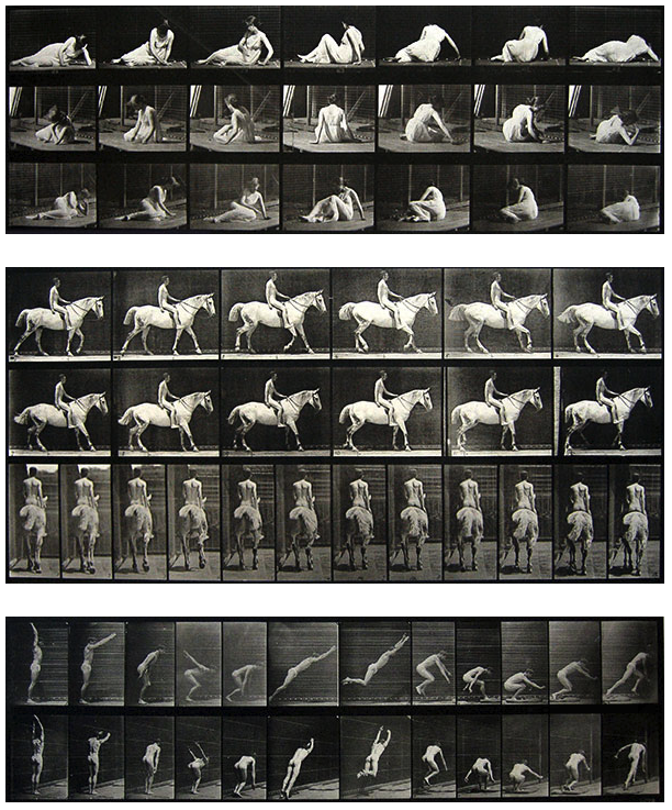 Eadweard Muybridge, Animal Locomotion
