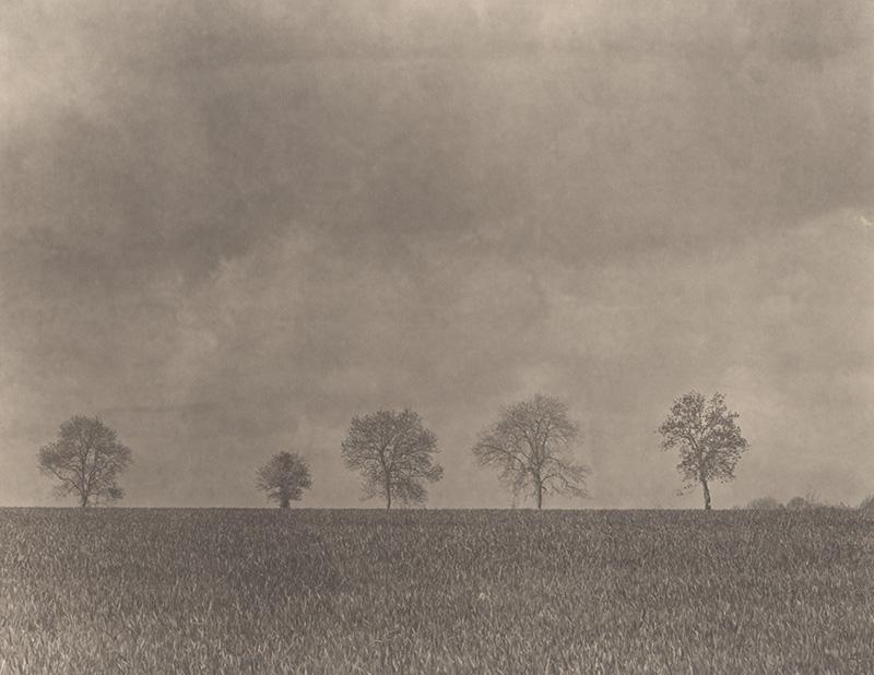 Un regard contemplatif sur la nature, par Takeshi Shikama