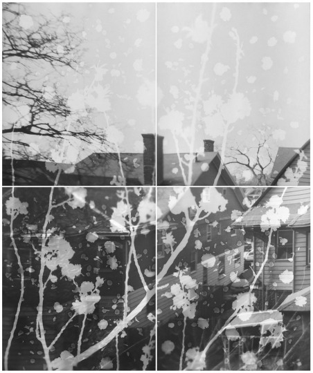 Motohiro Takeda - Cherry Blossoms, 2015 © Motohiro Takeda, courtesy IBASHO