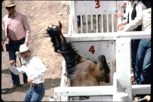 Sarah Hoskins' sensitive look on rodeo in the 1980s