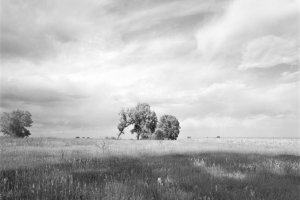 Authentic images of cottonwoods by Robert Adams