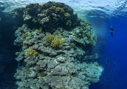 Alexis Rosenfeld, Coral Reefs, a Challenge for Humanity