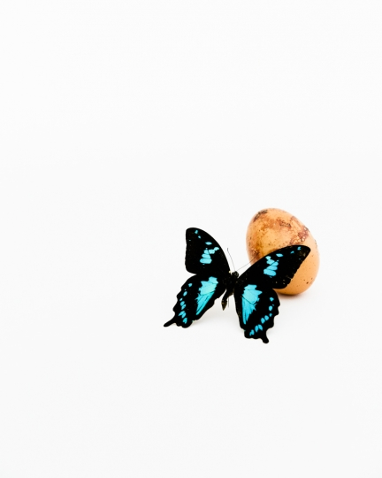 Egg & Pinned Butterly © Cosimo Cella