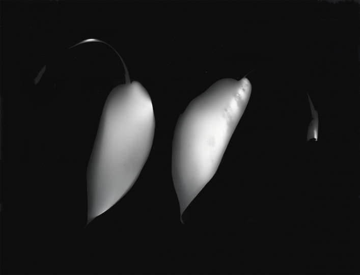 Untitled photogram, 1991