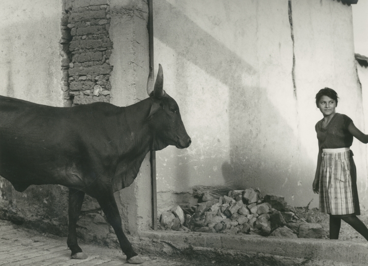 Mariana Yampolsky. The Maiden and the Bull / La doncella y el Toro 1992