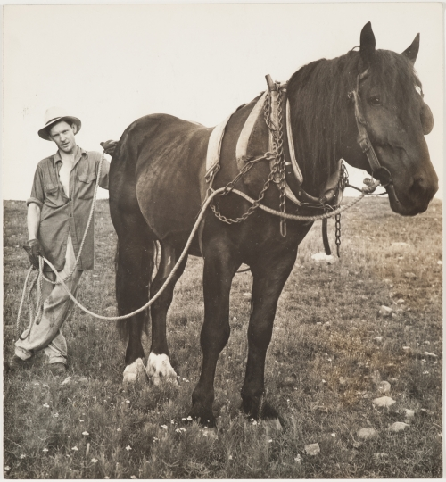 Sid Grossman. Arkansas (farmer and horse), 1940. Gelatin silver print. 8 1/8 x 7 1/2 inches. Collection Pérez Art Museum Miami, gift of Steven E. and Phyllis Gross. © Estate of Sid Grossman/Courtesy of Howard Greenberg Gallery, NY.