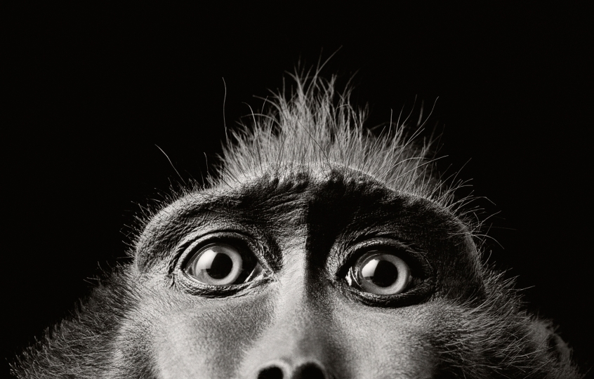 Monkey Eyes 2004 © Tim Flach