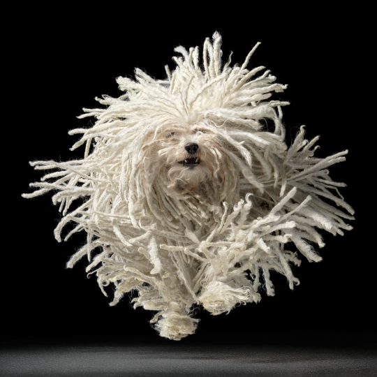 Flying Mop 2010 © Tim Flach