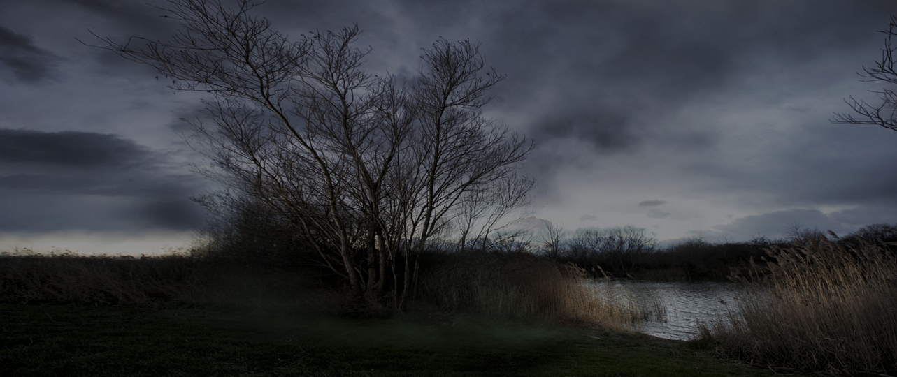 Tree At Dusk - The Lake and Other Lies © Per Morten Abrahamsen