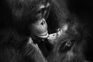 Isabel Muñoz : « Apes are just like us !…