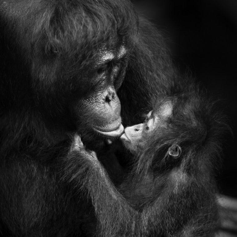 Best Of 2018 - Isabel Muñoz : « Les grands singes sont comme nous ! »