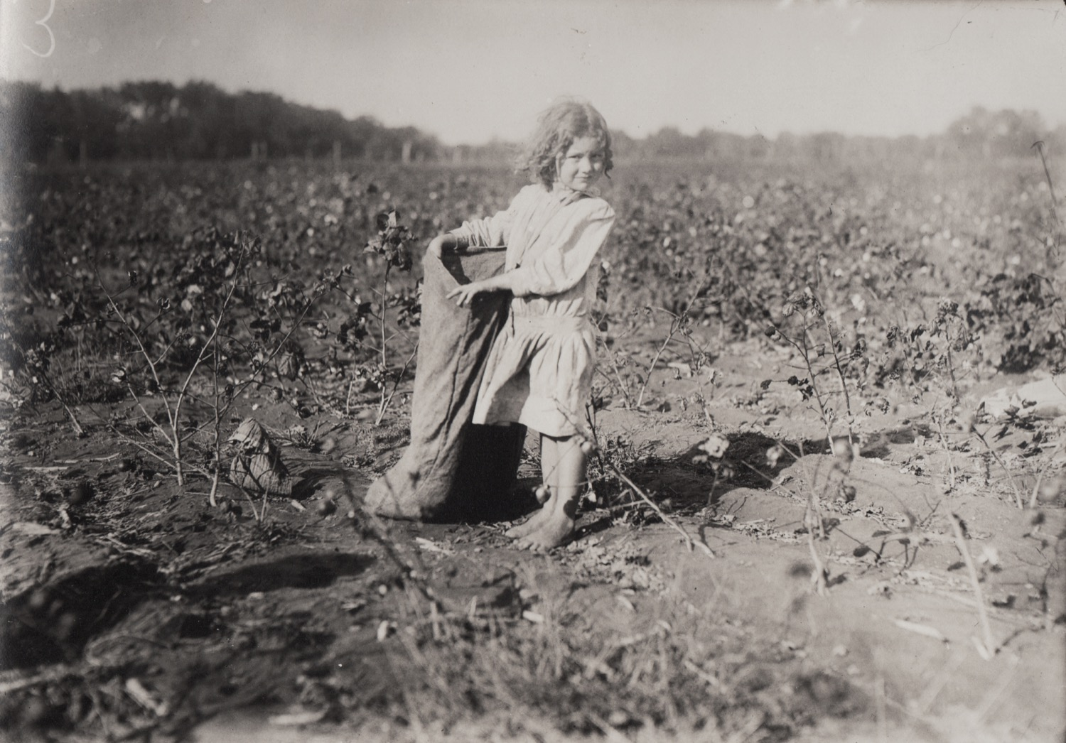 Lewis HINE, Cotton Picker Girl