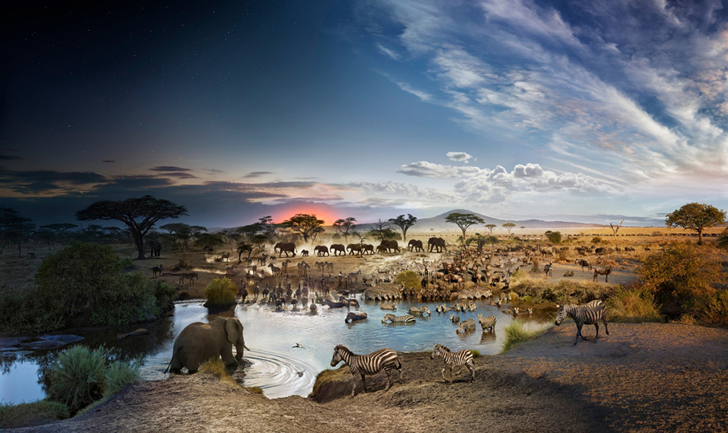 Stephen Wilkes Serengeti National Park, Tanzania Fuji Crystal Archival Photograph Executed in 2015