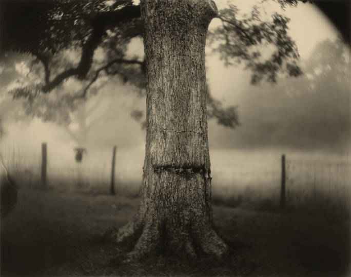 Sally Mann (American, born 1951), Deep South, Untitled (Scarred Tree), 1998, gelatin silver print, National Gallery of Art, Washington, Alfred H. Moses and Fern M. Schad Fund © Sally Mann