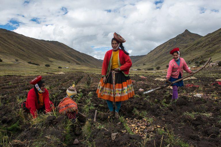 Luis Fabini: Harvest / Récolte