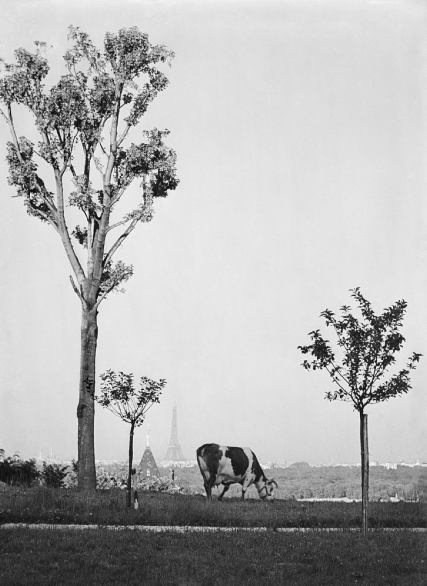 France from Saint-Cloud - André Kertész and the magazine Art ...