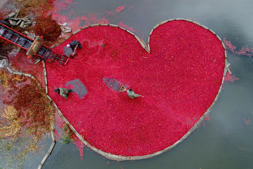 Sergei Gapon, Belarus, Cranberry heart, My Planet, single, 1st place - The cranberry heart: A picture taken with a drone on October 9, 2017 shows Belarusians harvesting cranberries at a farm in the village of Selishche, some 290 km south of Minsk. The cranberry spot changes its shape constantly. Usually it is just a circle or an oval. I was delighted to see a heart of cranberry. This heart is a symbol. Pinsk District is one of the regions with weakest economy in the country and the highest unemployment rate in Belarus. The cranberry harvest season is time to make money for locals. Often it is the only way to earn money at all. October is the most active month of the year. So cranberry heart symbolizes the engine of the region. Belarusian autumn is unpredictable. With heavy rain, frost or snow. Employees should spend about 10 hours in ice water every day. It is a really hard work.
