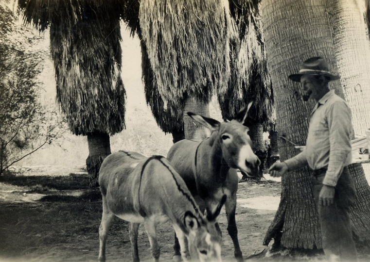 Prospector Gus Lederer treated his burros like his family, baking a pancake for each one every morning - Lula Mae Graves