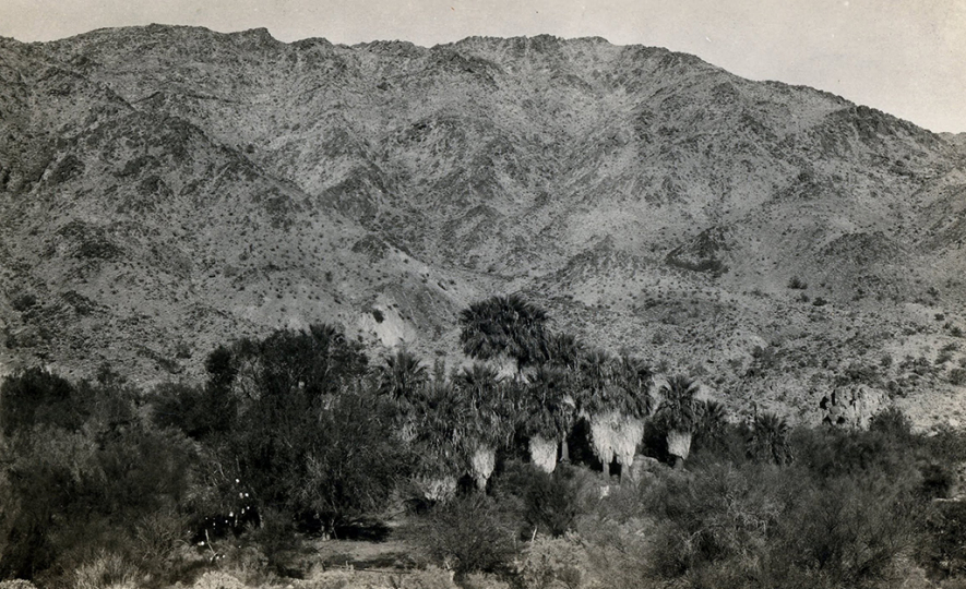 Corn Springs, 1929. The formerly lush oasis has since been depleted by a lack of groundwater, Lula Mae Graves photograph