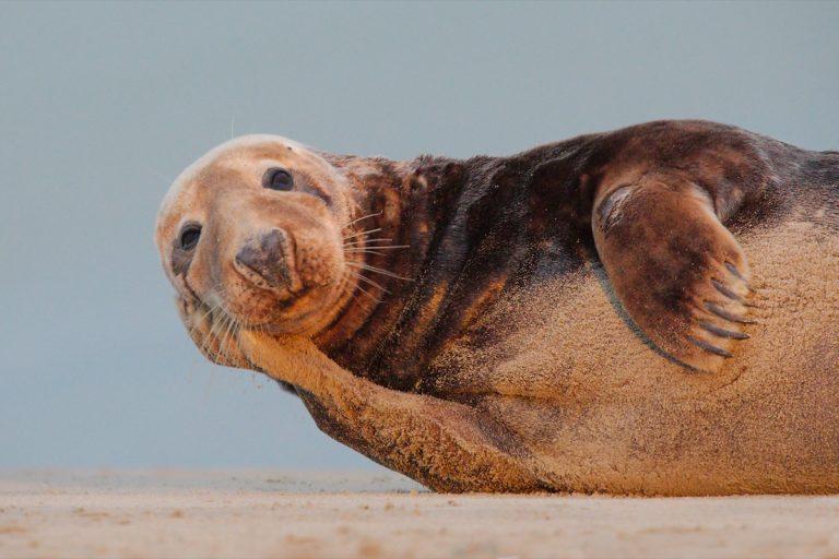 Philippe Druesne - Seals on the Opal Coast