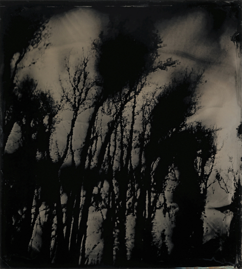 Sally Mann (American, born 1951) Blackwater 20, 2008-2012, tintype Collection of the Artist © Sally Mann