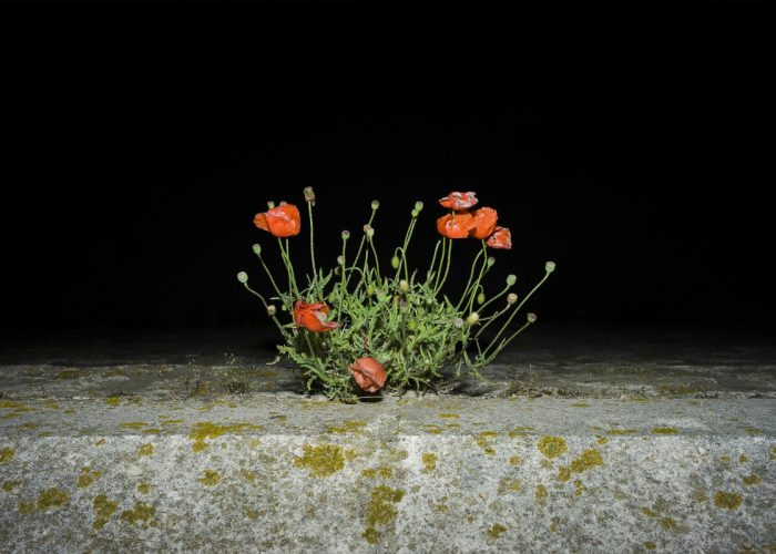 Circulation(s) - Anna Cherednikova: Unwanted