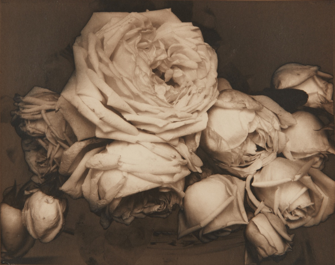 Edward Steichen, Heavy Roses, Voulangis, France, 1914 Palladium print. 7 1/2 x 9 1/2 in. (19.1 x 24.1 cm) Image courtesy of Phillips. Estimate: $400,000-600,000 SOLD FOR $524,000