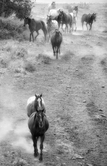 Horses and Dust © Sandy Lebrun-Evans – Courtesy Multiple Exposures Gallery