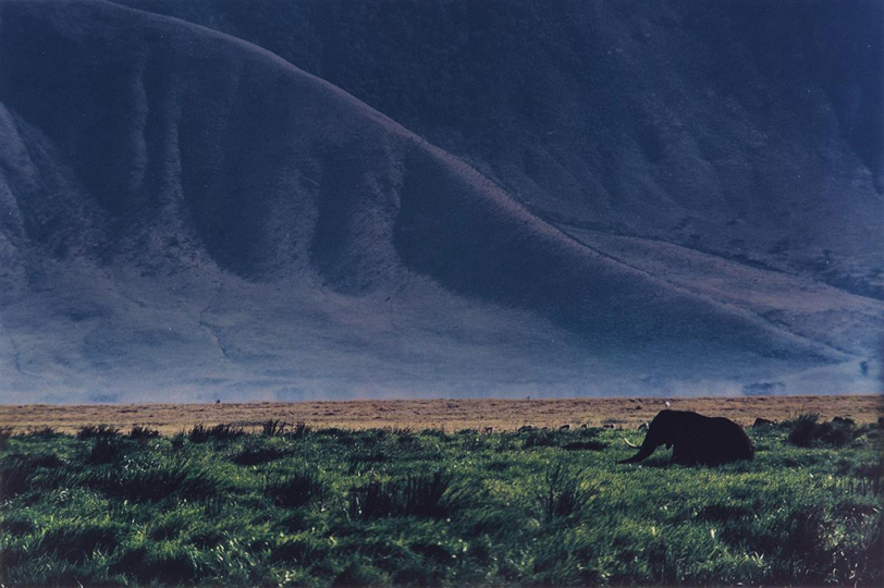 Lot 234: ERNST HAAS (1921-1986) Elephant in the wild. Estimate $3,000 - $4,500. - Courtesy Swann Auction Galleries