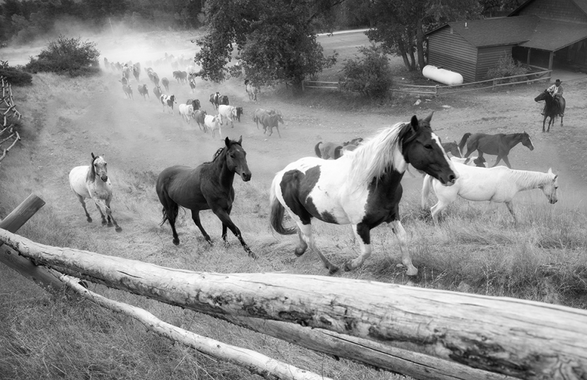 Ranch Commute © Sandy Lebrun-Evans – Courtesy Multiple Exposures Gallery