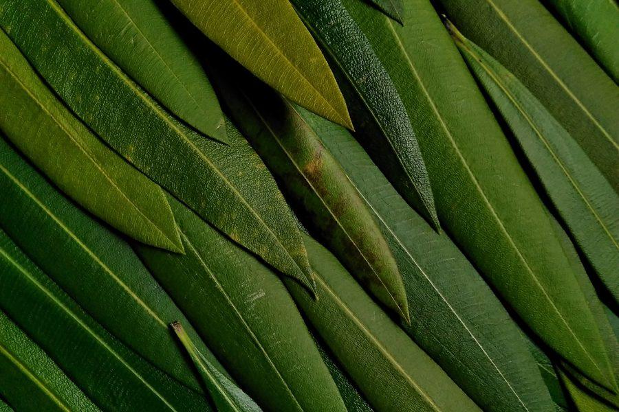 Takamasa Honda – Leaves