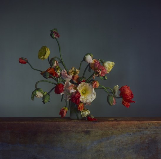 RICHARD LEAROYD Flowers, Day 2, 2019 camera obscura Ilfochrome photograph mounted to aluminum image, paper and mount, 32 x 32 inches frame, 39 5/8 x 39 3/8 x 2 ½ inches signed in ink on label affixed verso to frame 1 in a series of 7 unique photographs © 2019 Richard Learoyd