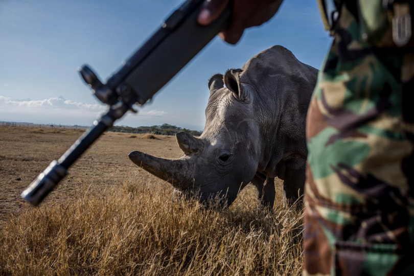John Macharria, 36, a member of the NPR (National Police Reservists) patrols the grounds of Ol Pejeta conservancy from poachers with Najin in the background, 2018 © Justin Mott, courtesy Anastasia Photo, New York.