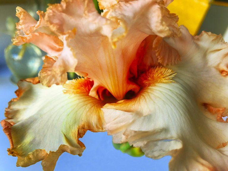 Joel Grey : The Flower Whisperer
