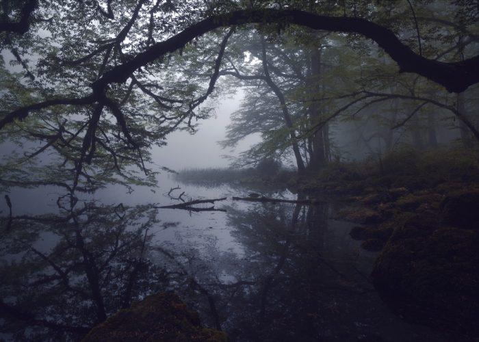 Mehran Naghshbandi - Terre de rêves égarés