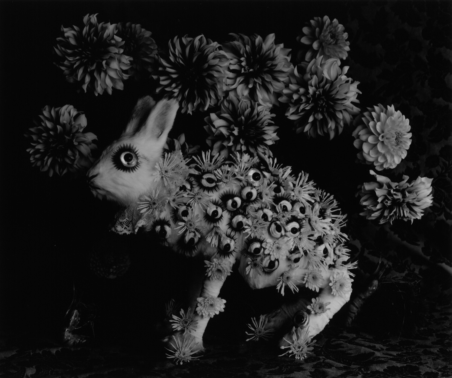 Michiko Kon, Rabbit and Eye, 2013, Silver print, 40,6 x 50,8 cm