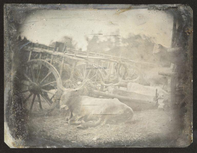 Quel ancien maître de la photographie a créé la première image d'un animal vivant?