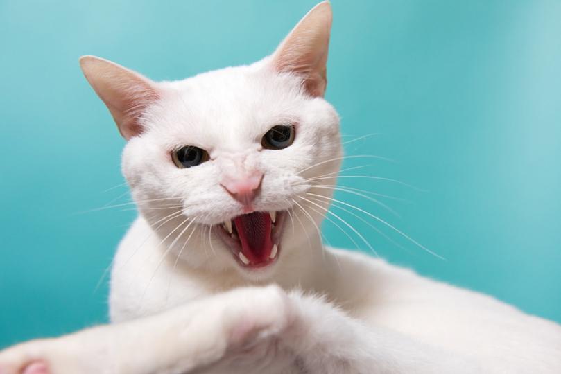 NEKOproject – La photographie des chats au Japon comme miroir d'une société